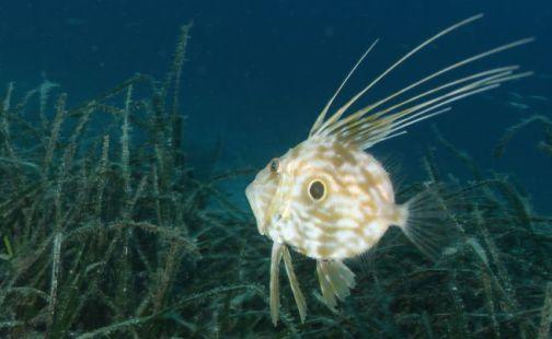 Sunce conducts marine research in Primorsko-goranska County