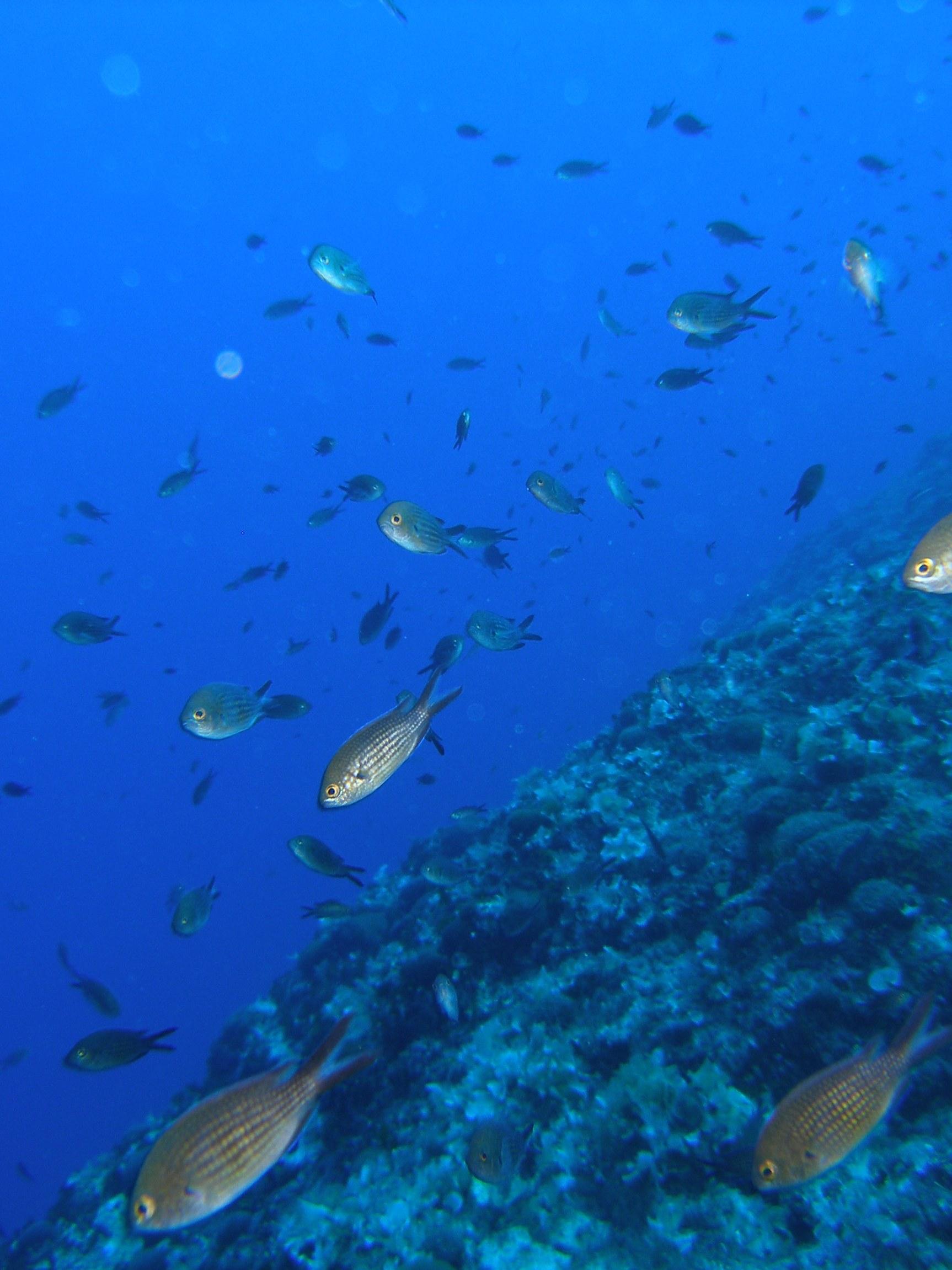 Sunce primljeno u međunarodnu organizaciju za zaštitu i očuvanje morskih ekosustava – Seas At Risk