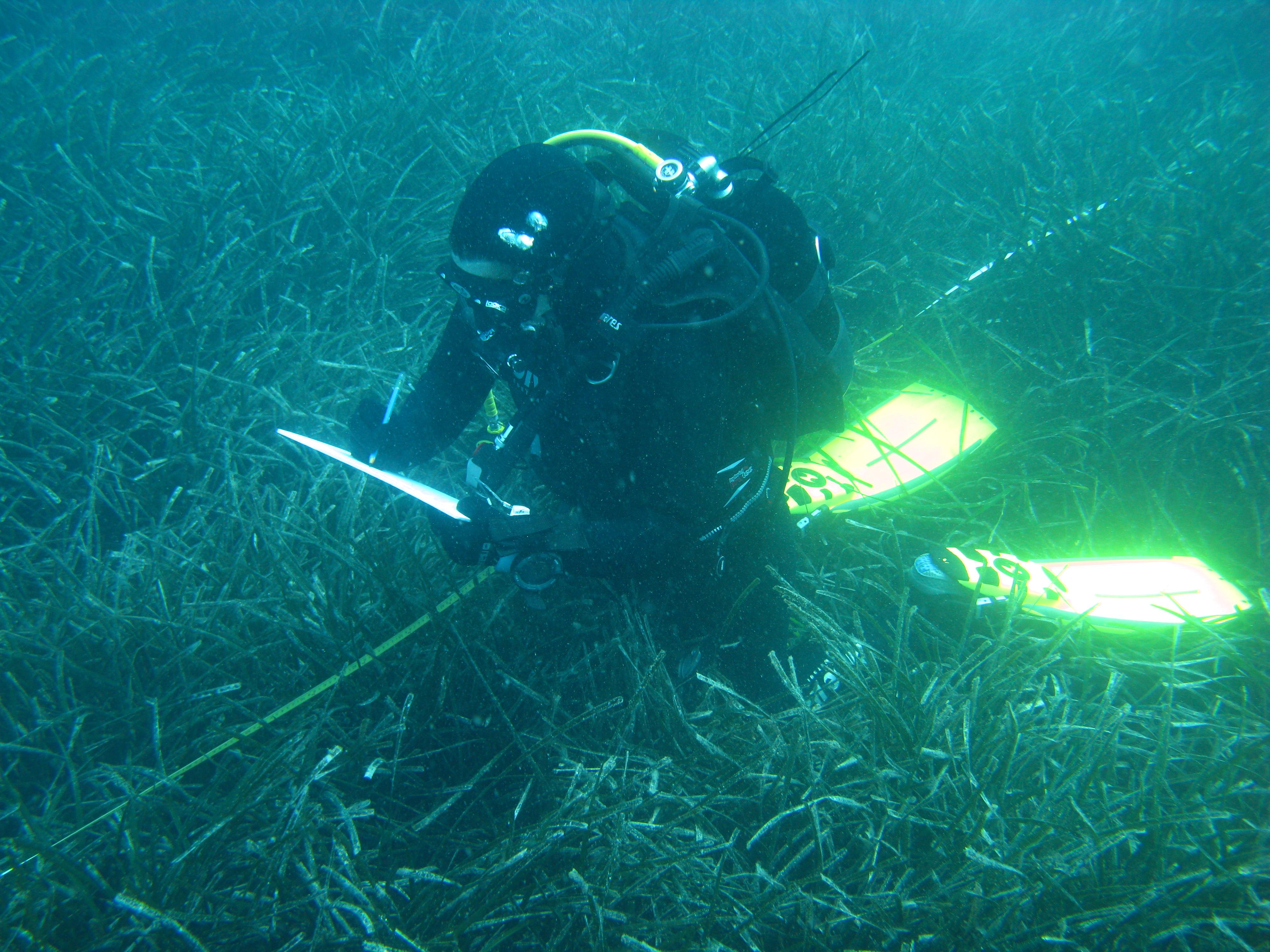 Kartiranje, monitoring i upravljanje prekograničnom Natura 2000 mrežom na moru – 4M