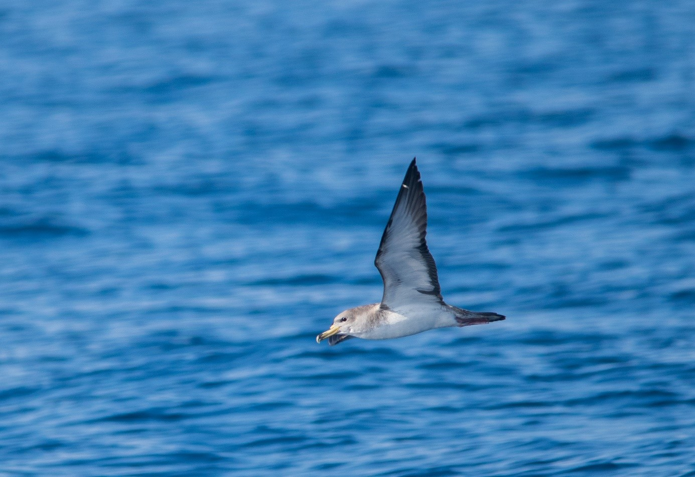 "Project LIFE Artina – ""Seabird Conservation Network in the Adriatic"""