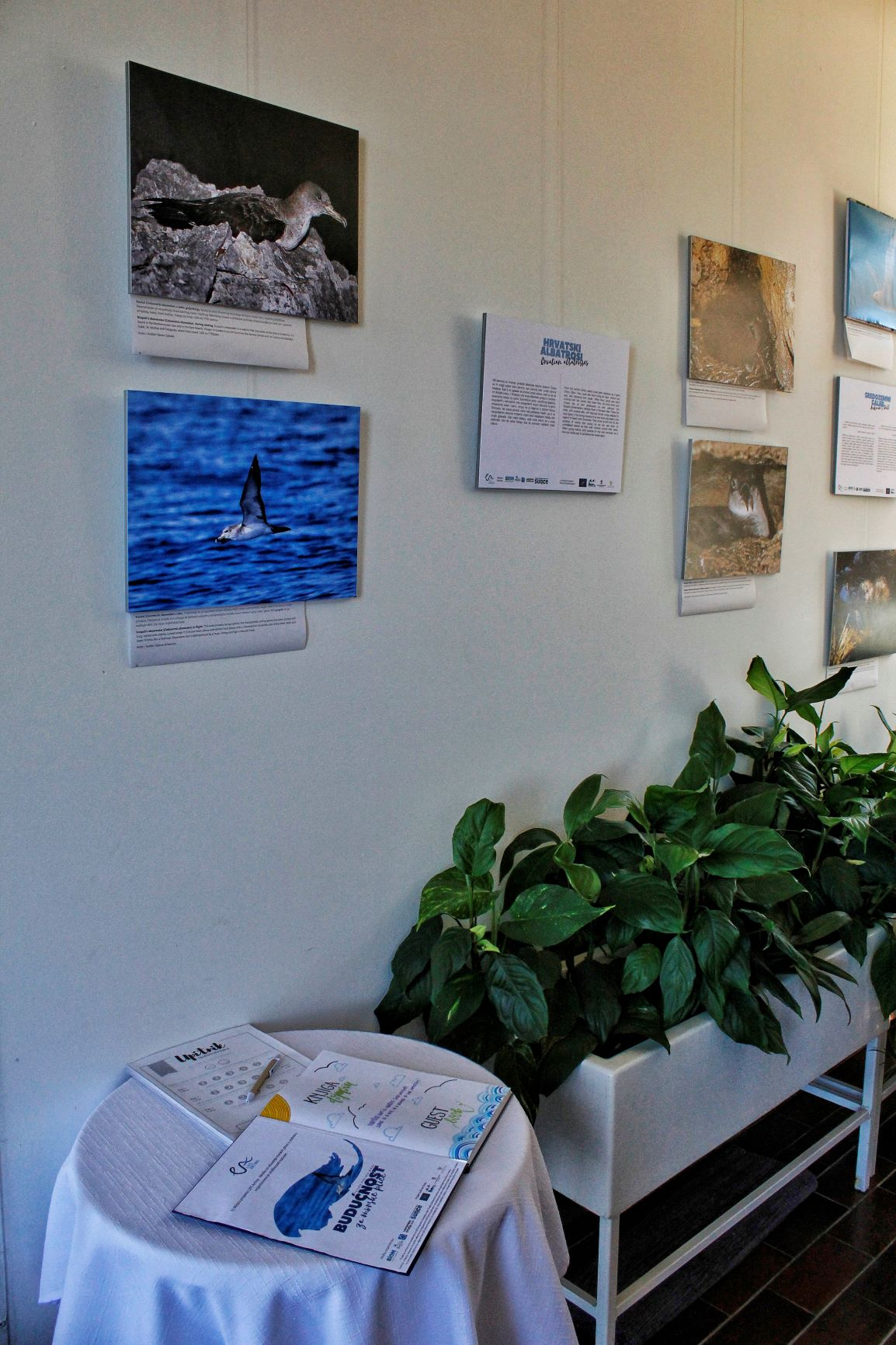 "Exhibition ""Future for sea birds"" opened"