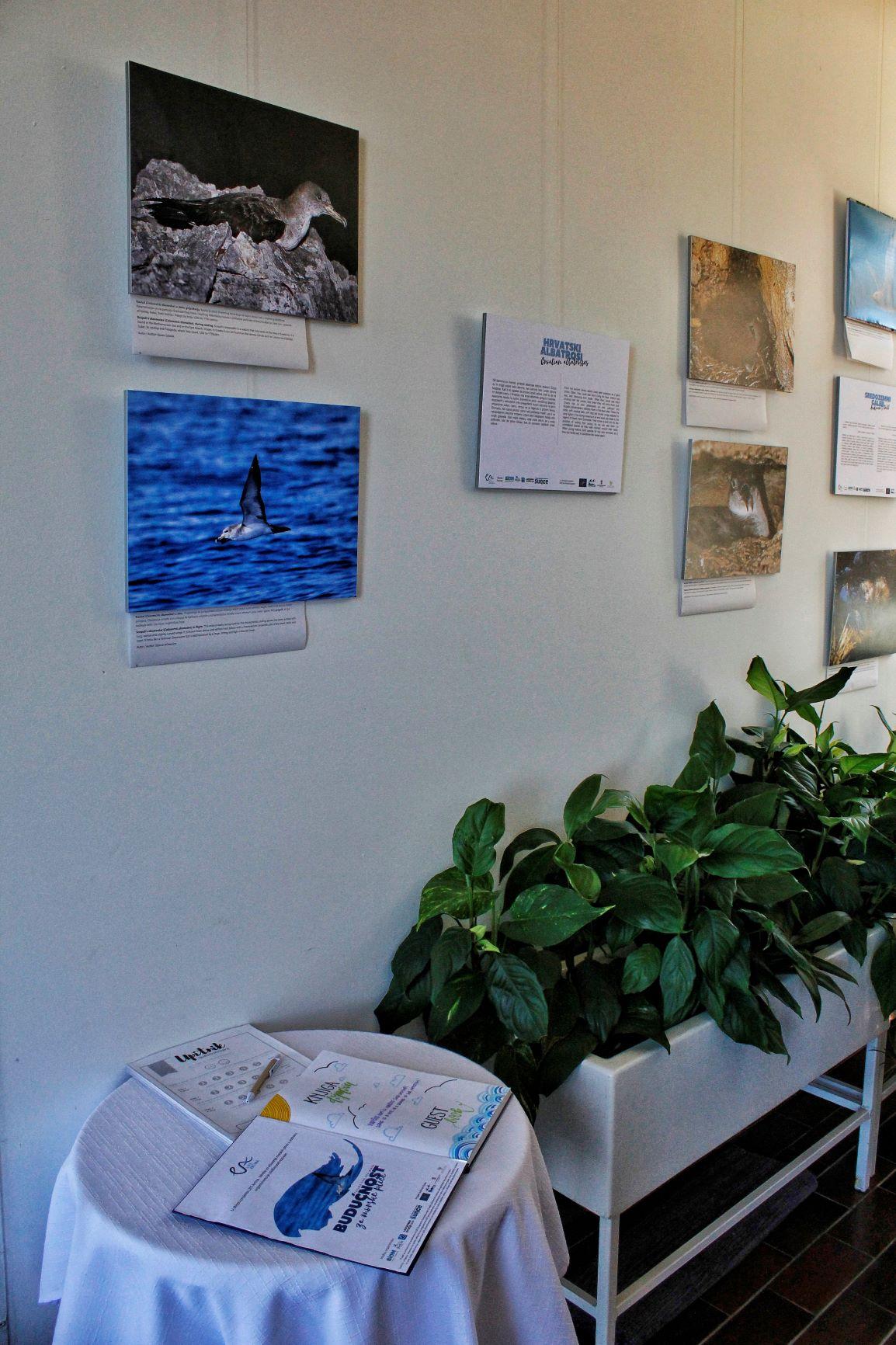 "Exhibition ""Future for sea birds"" opened"